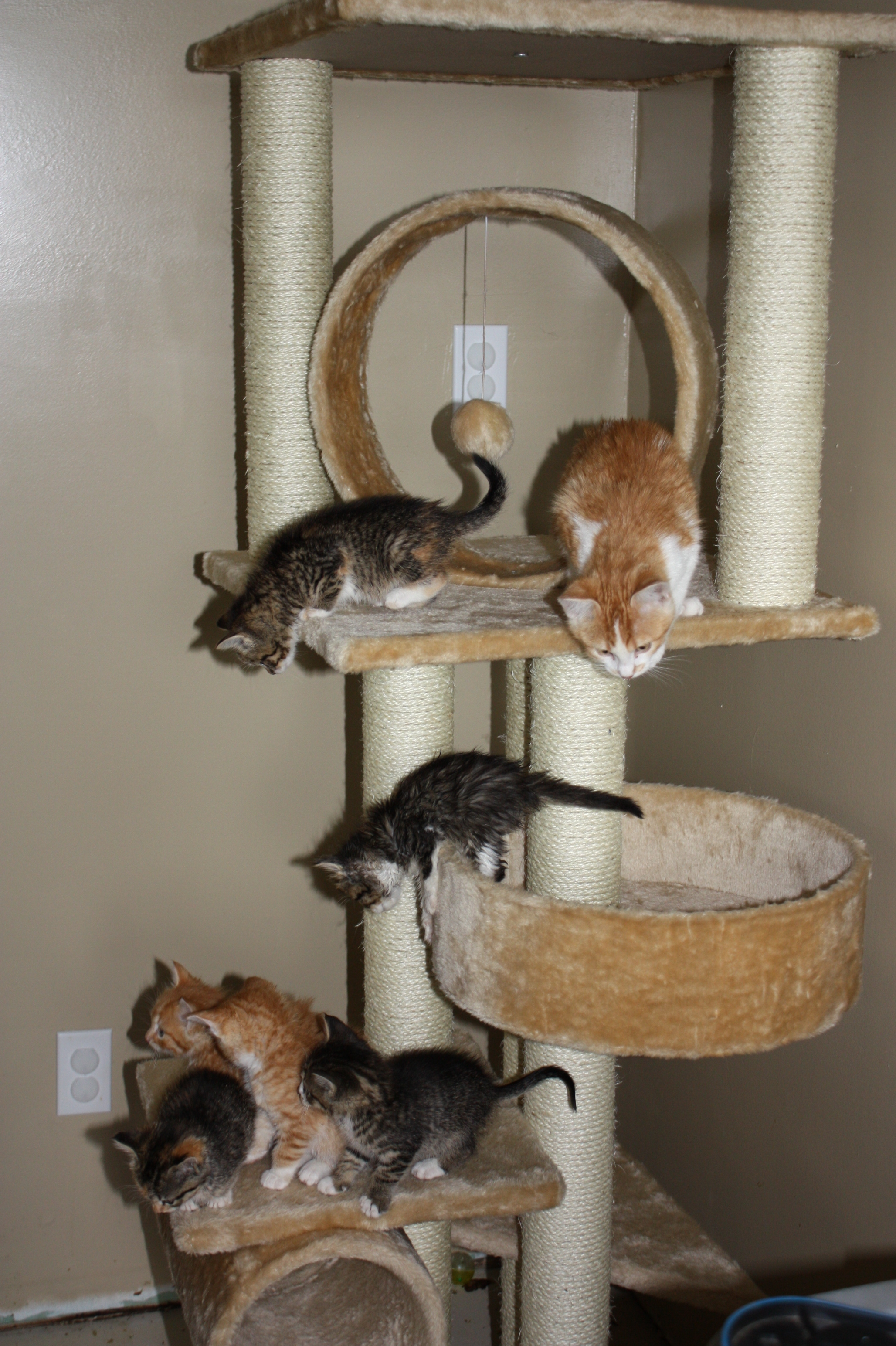 KittensOnTower_03