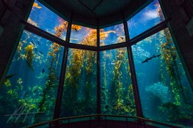 10. Go to the Monterey Bay Aquarium