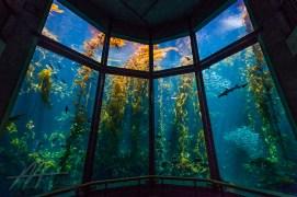 10. Go to the Monterey Bay Aquarium