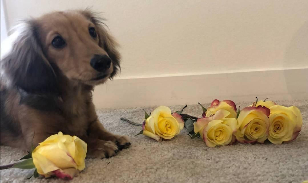 Loving Lately: Doggy Addition – February 2019