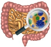 gutmicrobiota2
