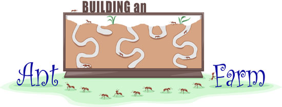 The Antscanada Global Ant Nursery Aims At Promoting The Keeping Of Native Ant Species And Not Here Is What