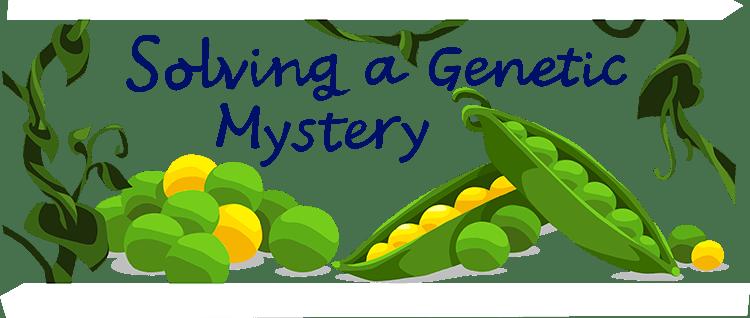 Gregor Mendel Ask A Biologist