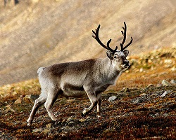 Many smaller mammals, such as. Animals Of The Boreal Forest Ask A Biologist