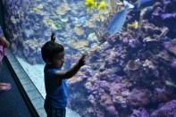 Shishir gazes at the Aquarium