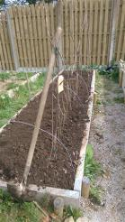 beans planted, supports put in (1)