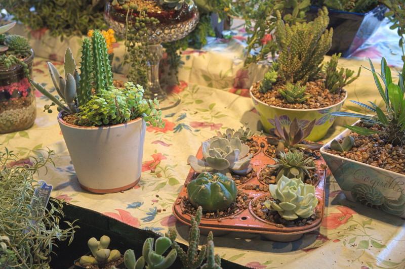 For a little desert garden