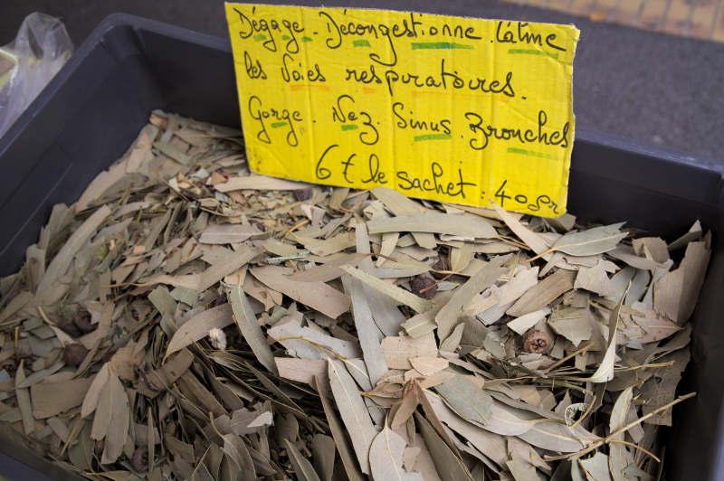 Eucalyptus for medicinal purposes