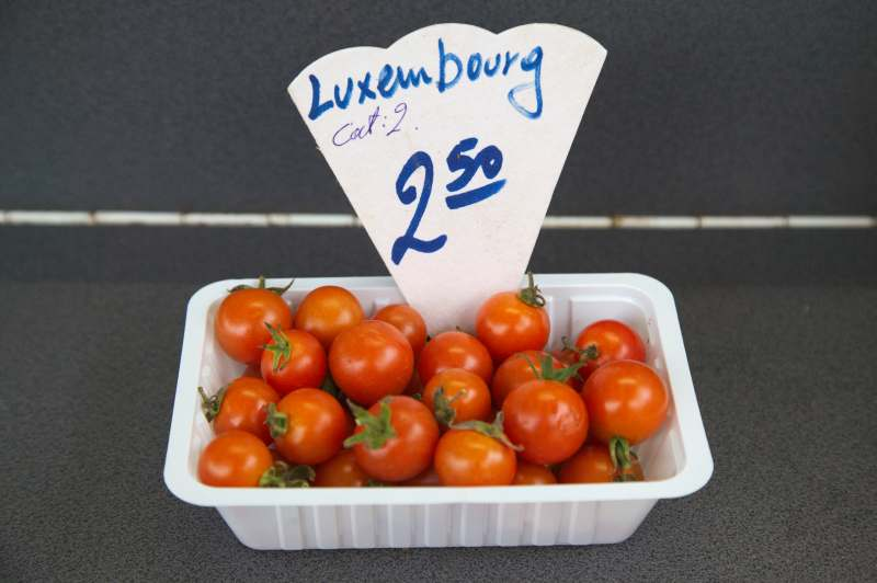 Last tomatoes of the season
