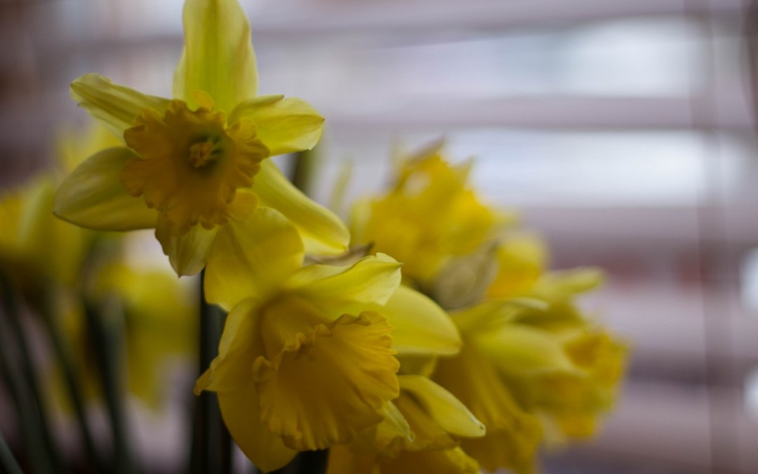 Jonquils and Mondays