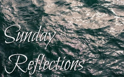 Sunday Reflections, November 19