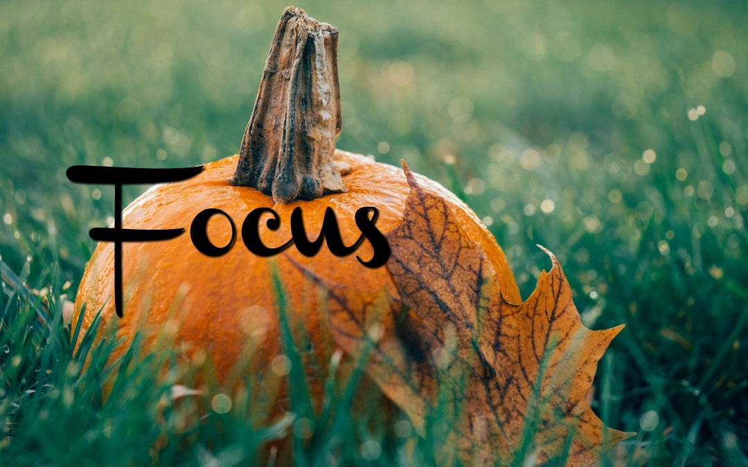 Autumnal Focus | October 2019
