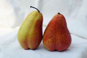 Pair of pears as a representation of the appearance for the route of rectal medicines.