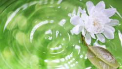 Best Non Hormonal Birth Control option - nature scene - rippling pool of green water with a white flower and leaf on the surface