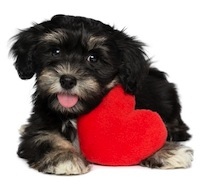 puppy heart 2