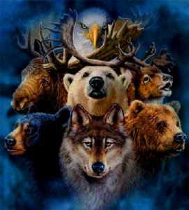 Learn How To Work With Animal Totems, Spirit Animals and Power Animals.