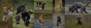 Asker Hundeklubb