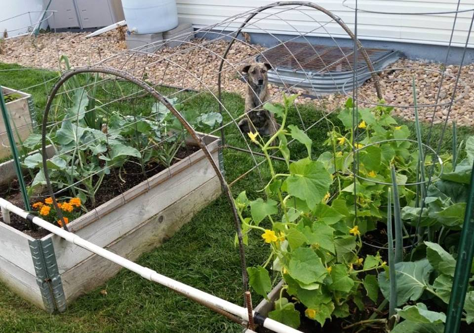 HOW TO BUILD A GARDEN TRELLIS