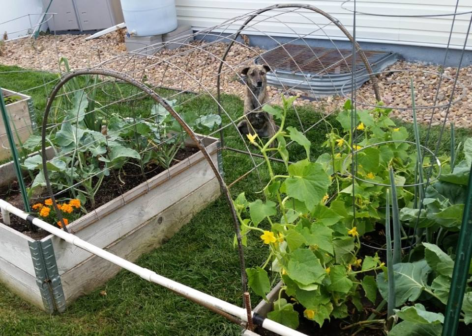 Finished Garden Trellis
