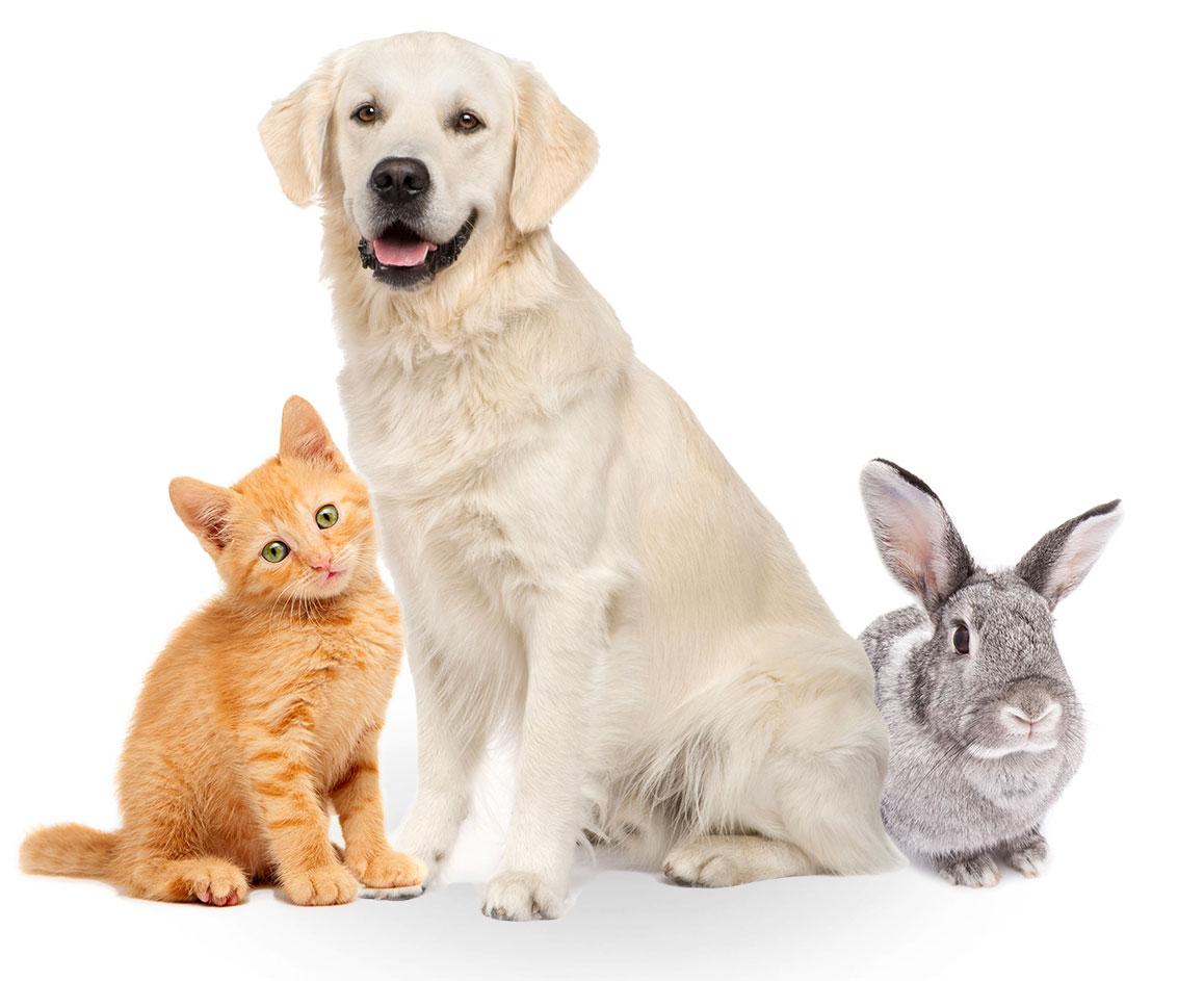 Do Animals Especially Pets Also Go To Heaven