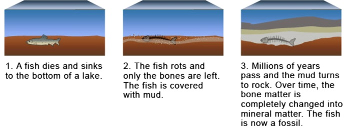 How Does Fossilization Occur