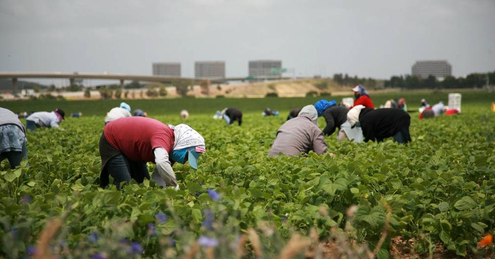 migrant-workers-in-Canada