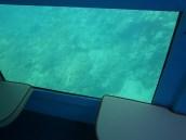 Подводный мир Адриатики
