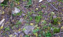 Из земли торчат острые пики
