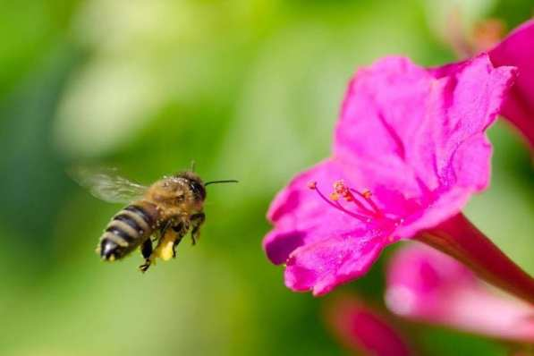 Image result for The Landing Strategy of the Honeybee