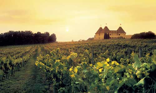 winery-and-vineyards