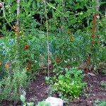 Frugal Friday: Grow Your Own Food