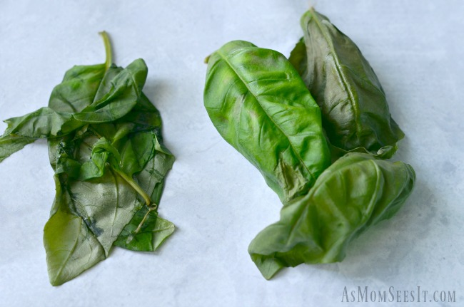 The 19 day difference between keeping Basil in a baggie vs. storage in the Rubbermaid FreshWorks