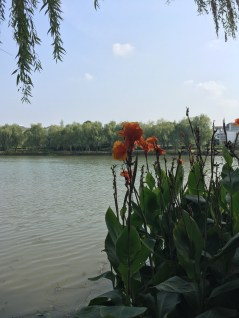 These beautiful flowers surrounded Jinji Lake, which is near where we hope to live.