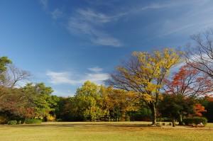 greenpark5
