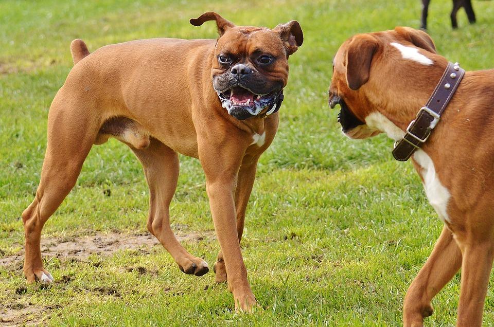 Asociación DIA apela a la responsabilidad civil de los dueños de los perros de Covelo