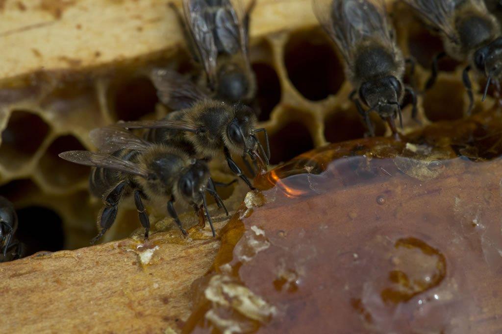 Formas de comer la miel