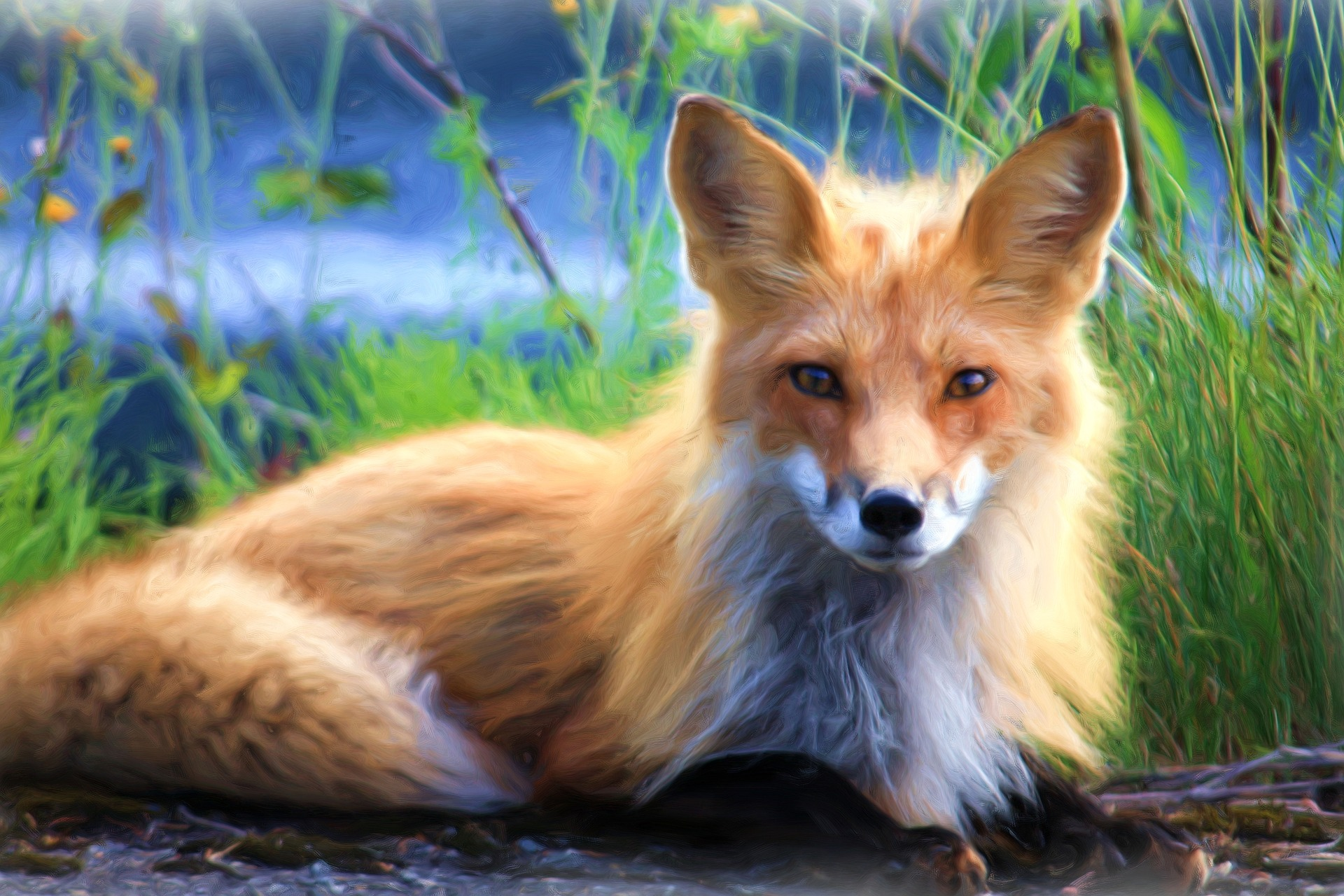 Long haired fox of lowland forest