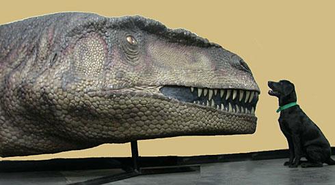 big dinosaur head