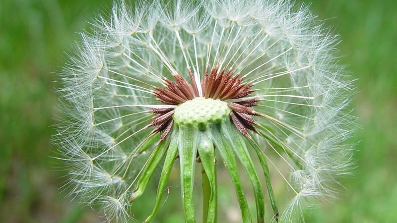 Ένα λουλούδι…