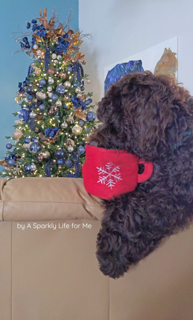 Mousse the Labradoodle Puppy with his Christmas Cup