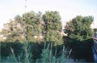 Olmeda Río Tarafa