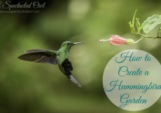 How to Create a Hummingbird Garden