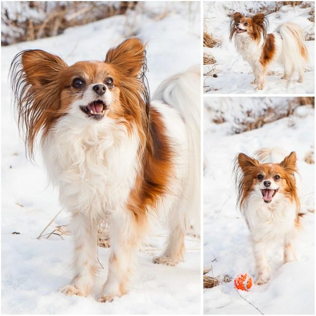 Anchorage Alaska Pet Photography 5