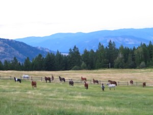 Horses in the field at Aspengrove Country Resort Vernon BC Canada