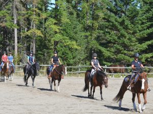 Holiday with horses - we offer Bales and Breakfast at Aspengrove Country Resort