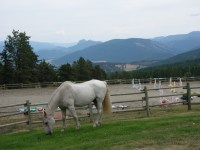 Riding arena and pasture at Aspengrove Country Resort