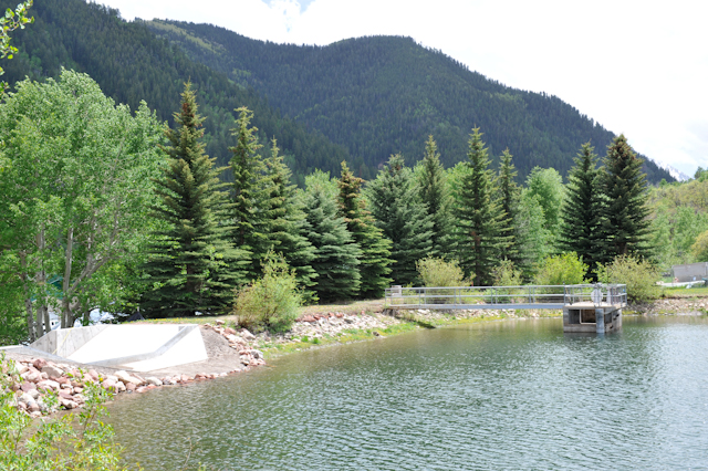 Spruce and aspen trees growing on the dam on the east side of the Thomas Reservoir in Aspen. The pond-size reservoir is on the hill behind the Castle Ridge apartment complex and Aspen Valley Hospital.