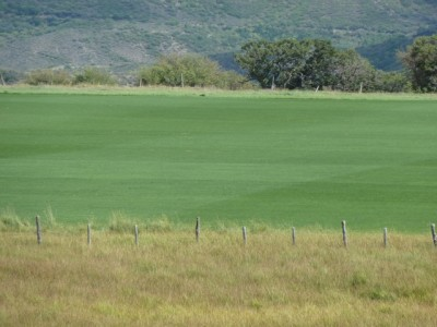 The Rose Spur polo field, planted in what appears to be bluegrass. It's off of Rose Spur Road and part of what's still known as the McCabe Ranch.