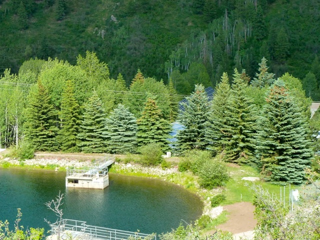 BEFORE: The 16 spruce trees that used to be on the dam on the east side of Thomas Reservoir, along with nine aspen trees.