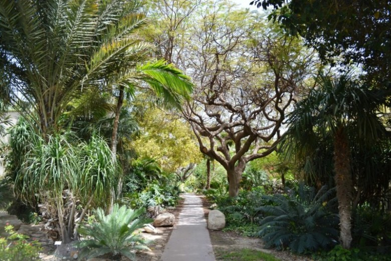 Lush tropical gardens reveal horticultural wonders at Kibbutz Ein Gedi on a hilltop above the Dead Sea.